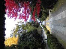 THE TWINS ☆Live photo☆-Image14331.jpg